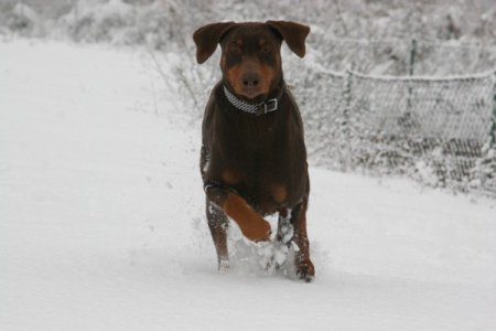 Flash enjoying the snow in Northern Italy in 2010